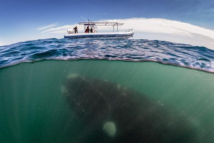 Creepy Sea Photos That Will Give You Thalassophobia (18 pics)