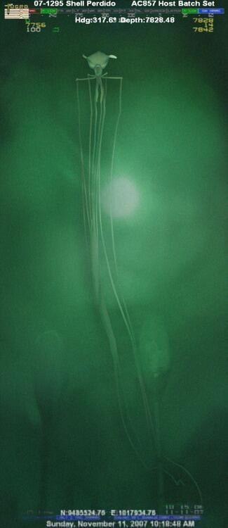 Creepy Sea Photos That Will Give You Thalassophobia (18 pics)