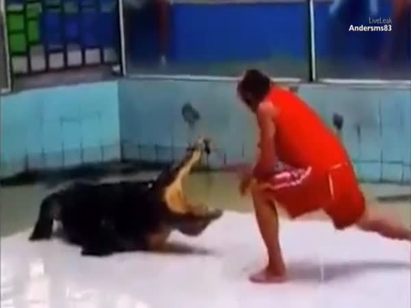 Thailand Trainer Has Crocodile Grab His Arm And Death Roll Him In Phuket