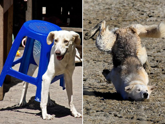 Funny Dog Fails That Will Make You Feel Bad For Laughing (16 pics)