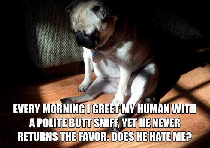 12 Thoughts From The Mind Of A Dog (12 pics)