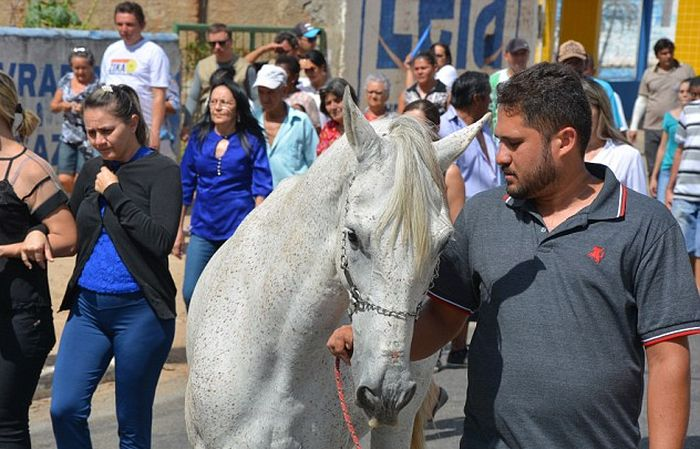 Heartbreaking Photos Show Sereno The Horse Crying At His Owner's Funeral (5 pics)