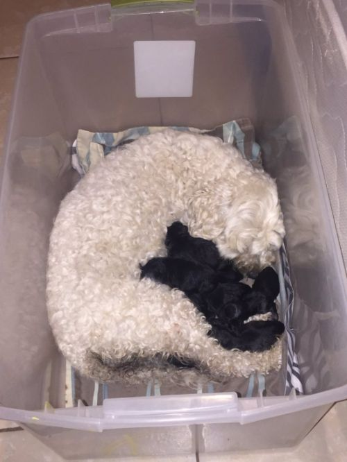 Twitter Users Demand Paternity Test For Suspicious Litter Of Pups (4 pics)