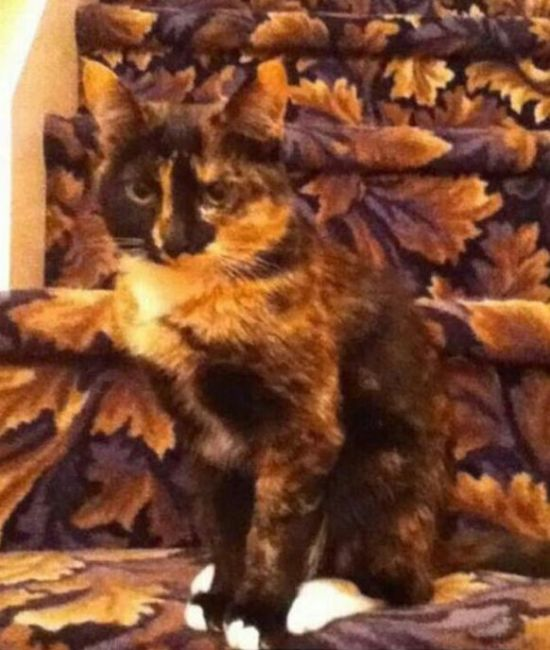 Cats Who Have Some Serious Camouflage Skills (12 pics)
