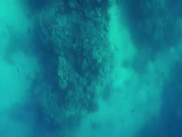 Shark Attack Bullshark Attacks Spearfisherman