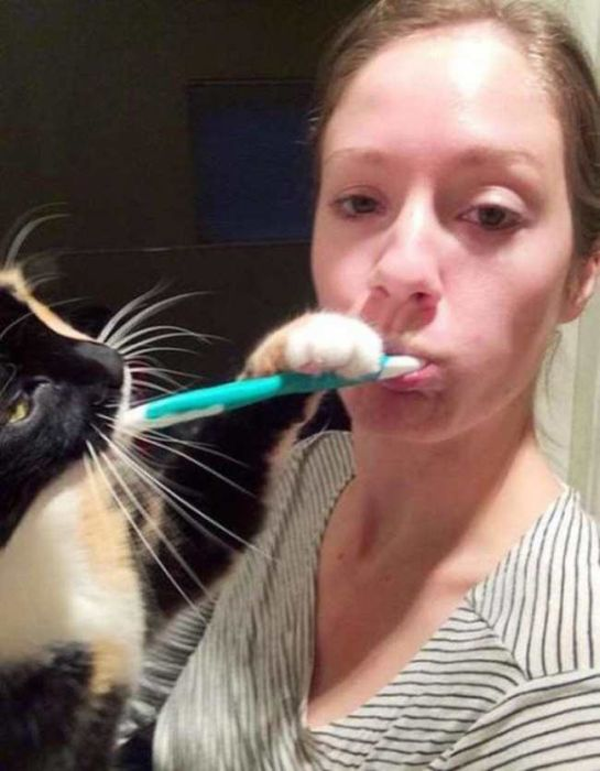 Cats That Just Don't Have A Care In The World (15 pics)