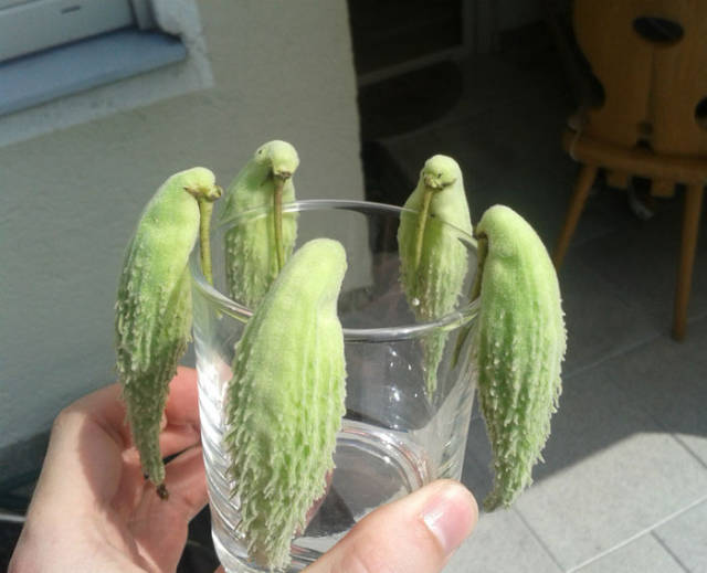 Sometimes Nature Takes On Bizarre Forms (50 pics)