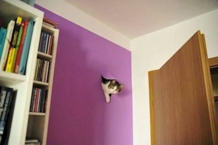 It's A Cat's World We Just Live In It (20 pics)