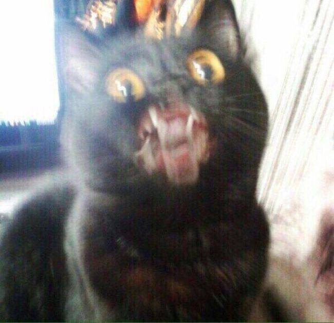 Cats Who Are The Complete Opposite Of Photogenic (10 pics)