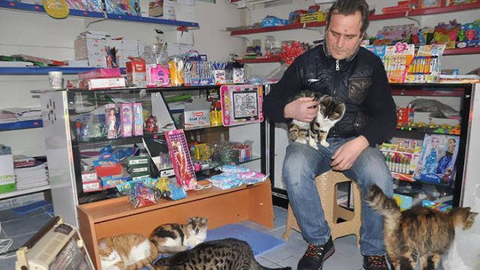 Local Istanbul Shop Owners Take Care Of Their Furry Friends (9 pics)