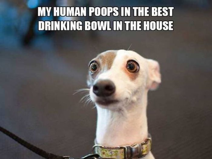 If People Could Read The Minds Of Dogs (12 pics)
