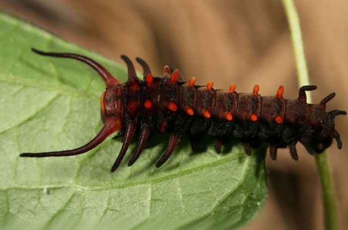 Incredible Transformations From Caterpillar To Butterfly (36 pics)