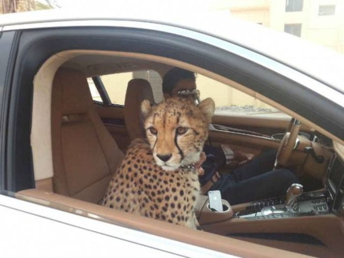 Dubai Is A Unique And Diverse Place (28 pics)