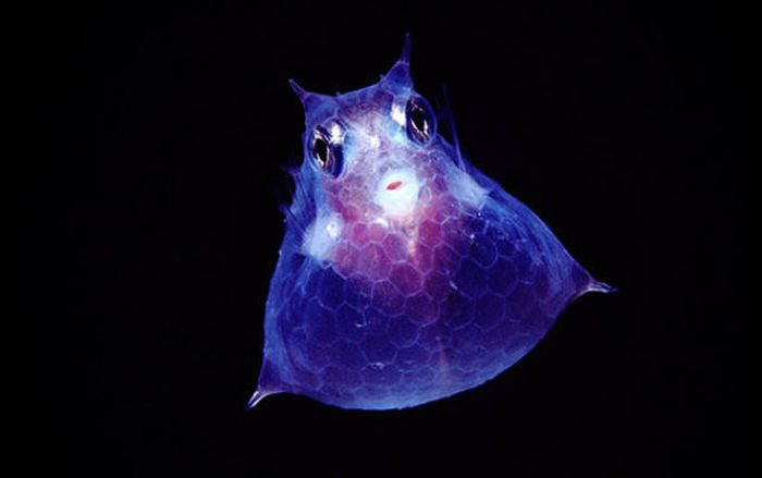 Strange Animals That Are Actually Transparent (34 pics)