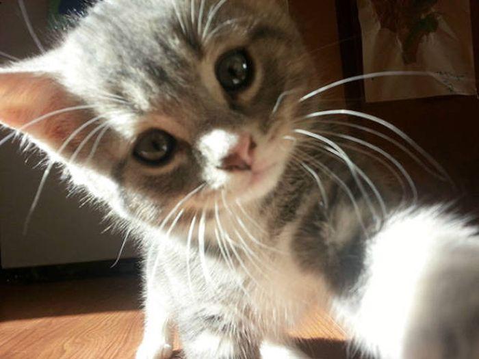 It Looks Like Animals Have Caught The Selfie Virus Too (48 pics)