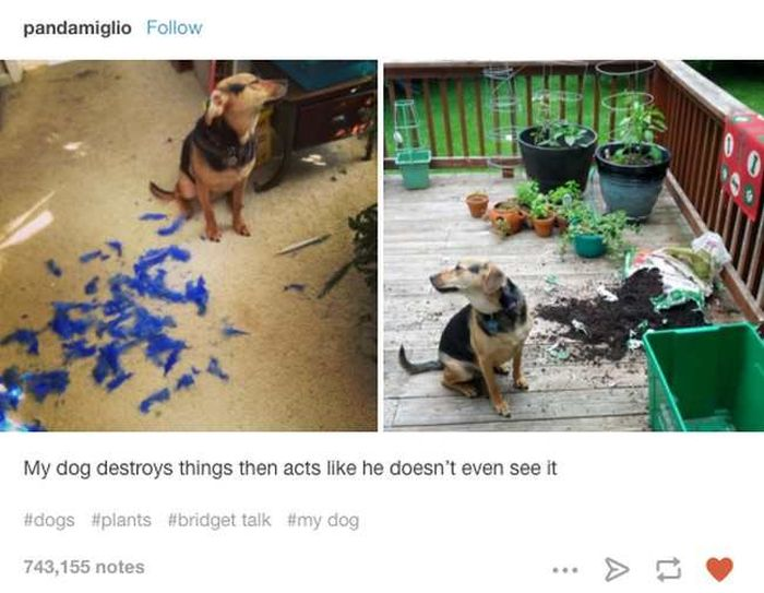 Proof That Dogs Are Better Than People (23 pics)