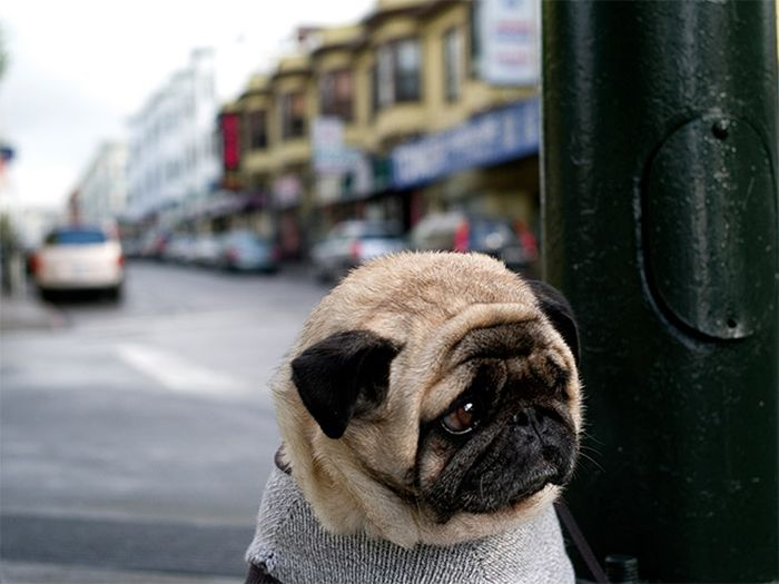 Sad Dogs Who Had a Really Ruff Day (16 pics)