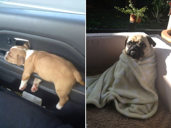 Sad Dogs Who Had a Really Ruff Day (16 pics)