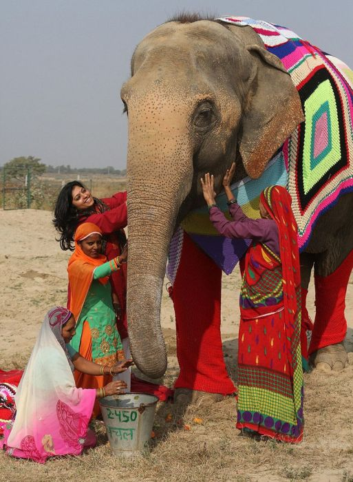 Indian Women Make Sweaters For Cold Elephants (6 pics)