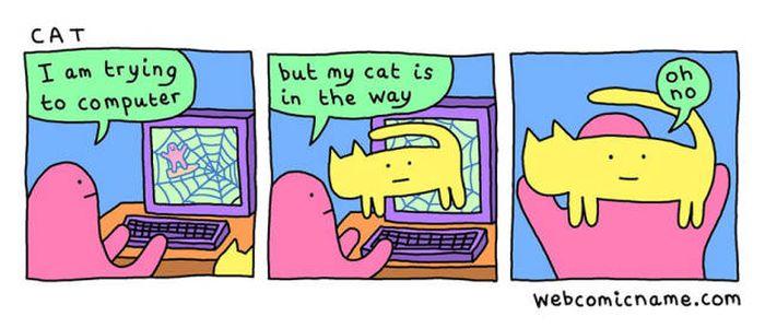 how to sedate a cat with benadryl