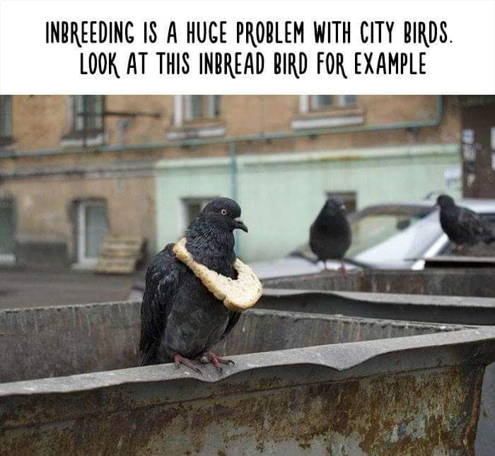 Little Known Animal Facts That Will Surprise You (10 pics)