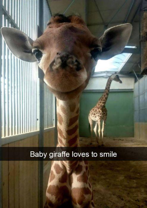 Amusing Snapchats Show The Real Lives Of Animals (45 pics)