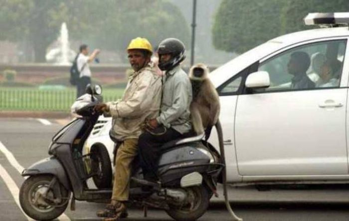 Pics That Prove India Is One Of The Wildest Places On Earth (39 pics)