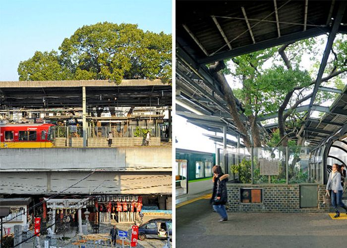 This Train Station In Japan Was Built Around A 700 Year Old Tree (7 pics)