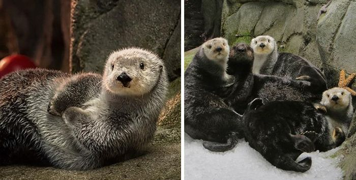 Zoos Battle Each Other In A Cute Animal Tweet Off (27 pics)