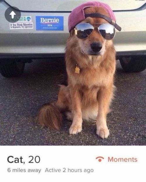 Hilarious Tinder Users Who Have An Awesome Sense Of Humor (20 pics)