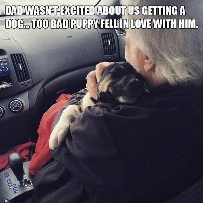 Dads Who Changed After Getting A Dog (12 pics)