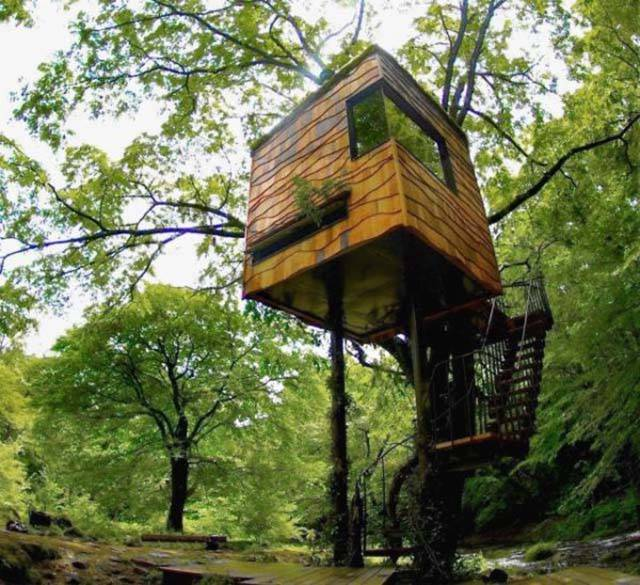 Everything Is So Beautiful When You Live In A Forest (25 pics)