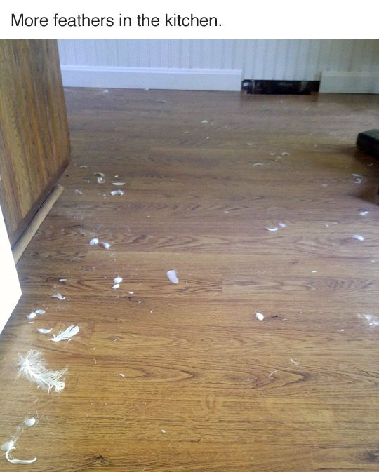 Detective Finds A Furry Culprit After Launching An Investigation (7 pics)