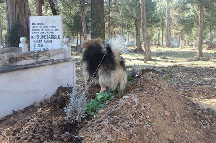 This Dog Truly Is A Symbol Of Eternal Loyalty (8 pics)