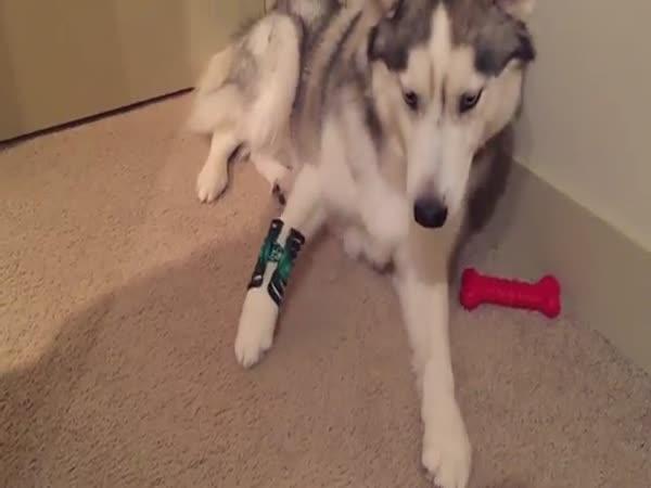 Husky Vs Hair Clip