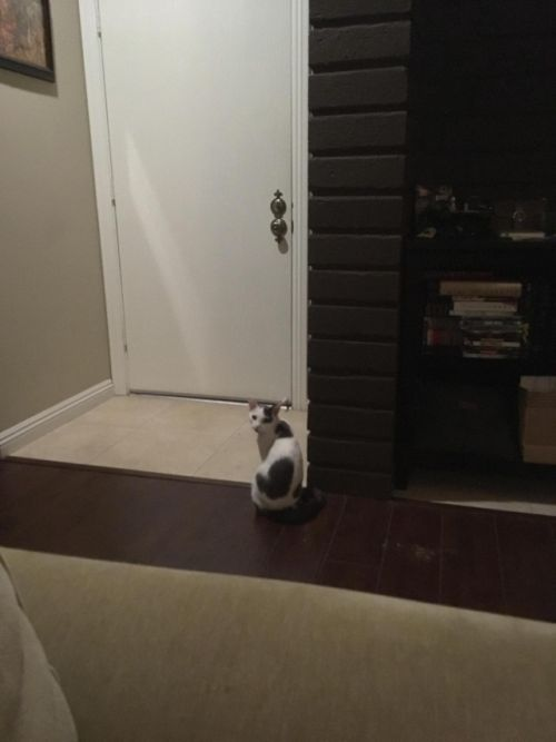 Adorable Cat Gets Confused (2 pics)