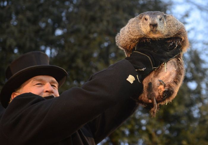 America's Chief Meteorologist Appears On Groundhog's Day (8 pics)