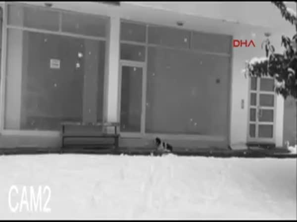 Freezing Homeless Dog