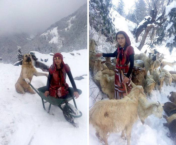 Girl And Her Dog Rescue An Adorable Mom Goat (6 pics)