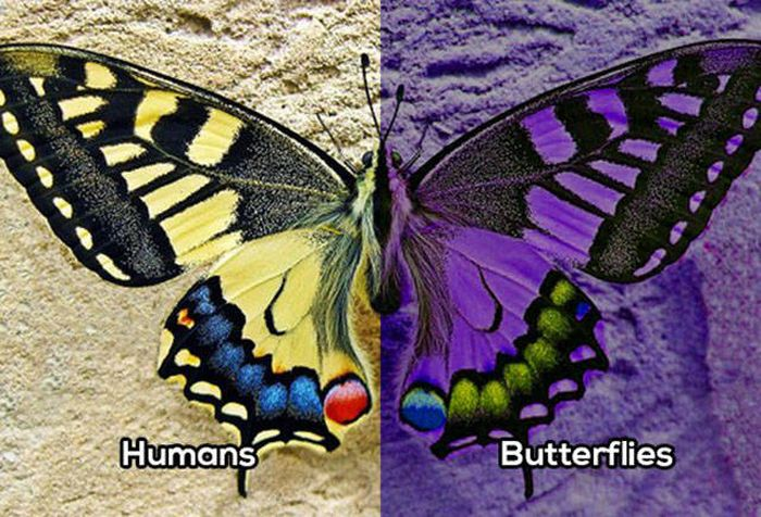 How Animals See The World Vs. How Humans See The World (10 pics)