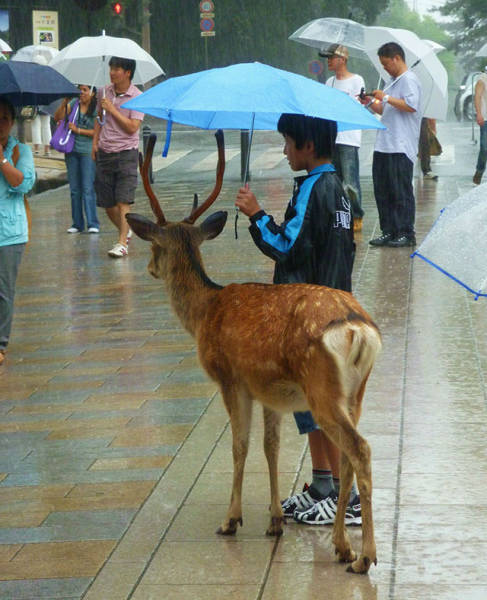 Kindness Will Take You Very Far In Life (46 pics)