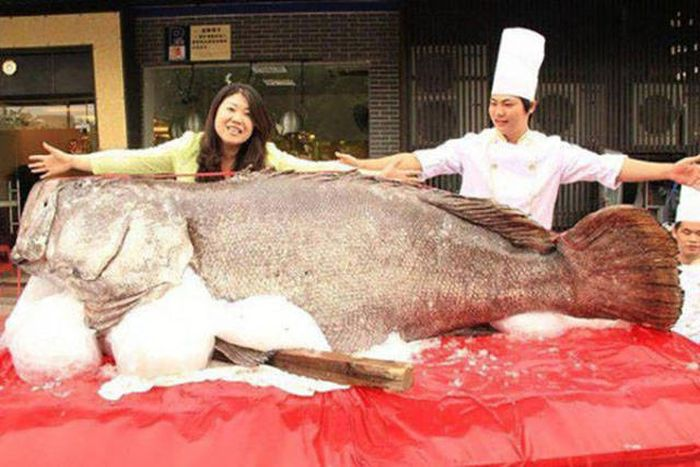 Gigantic Things That Prove Size Really Does Matter (37 pics)