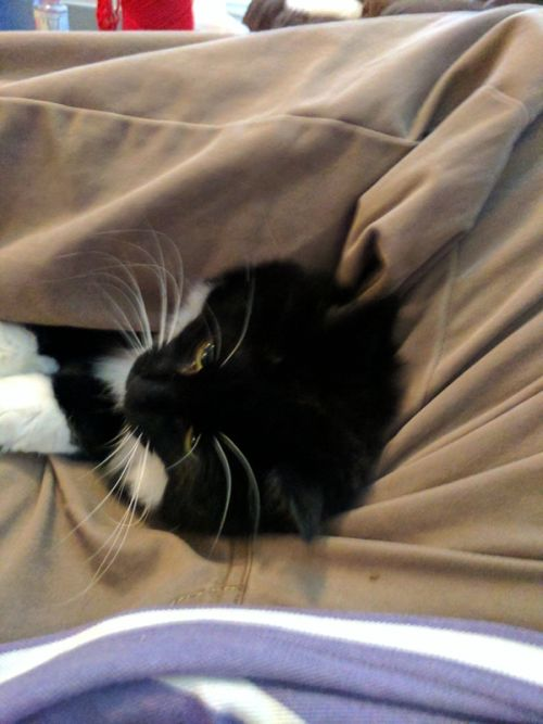 Cat Just Can't Get Enough Of Folded Legs (6 pics)