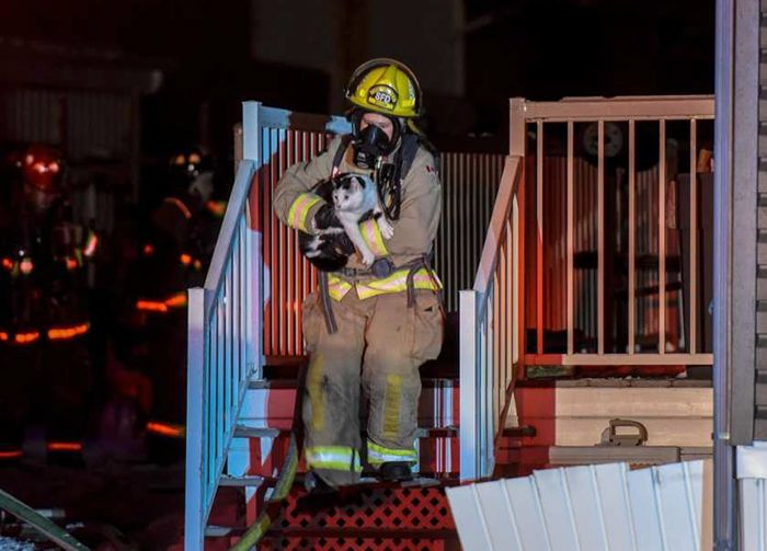 Cat Saves Family From Fire By Biting Its Owner (3 pics)