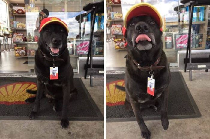 Abandoned Dog Gets Another Shot At Life (5 pics)