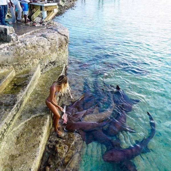 Bali Sharks (10 pics)