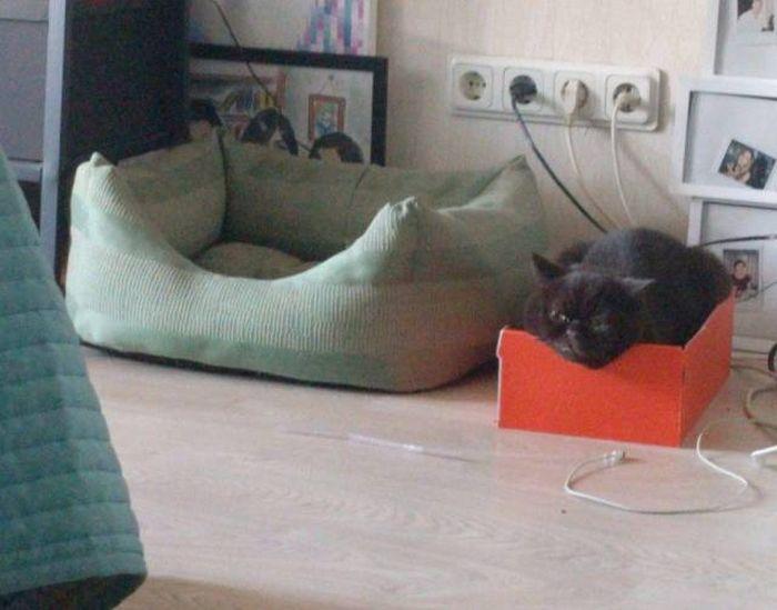 Кото-коробка