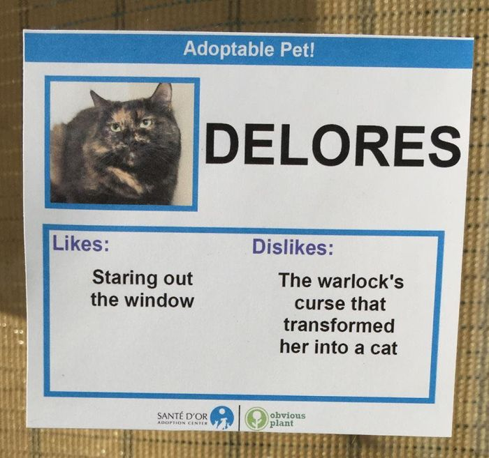 Adoptable Cats And Their Hilarious Likes And Dislikes (14 pics)