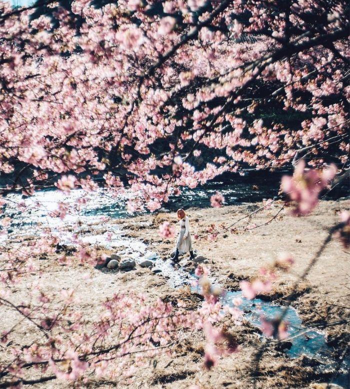 Cherry Blossom Season In Japan Is Beautiful (6 pics)