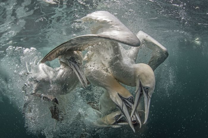 Stunning Underwater Photographs That Will Take Your Breath Away (23 pics)